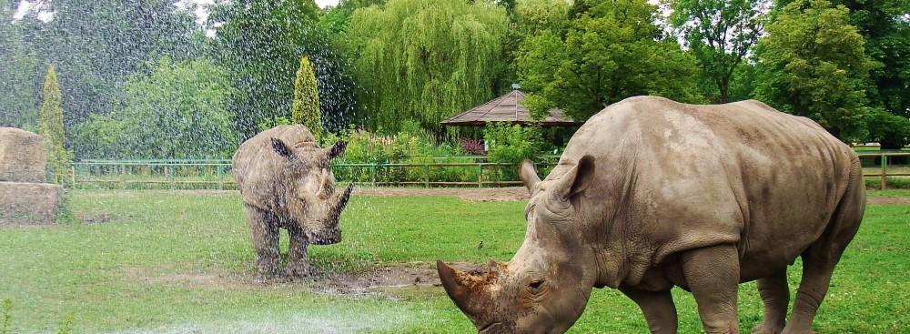zoo of Chorzów