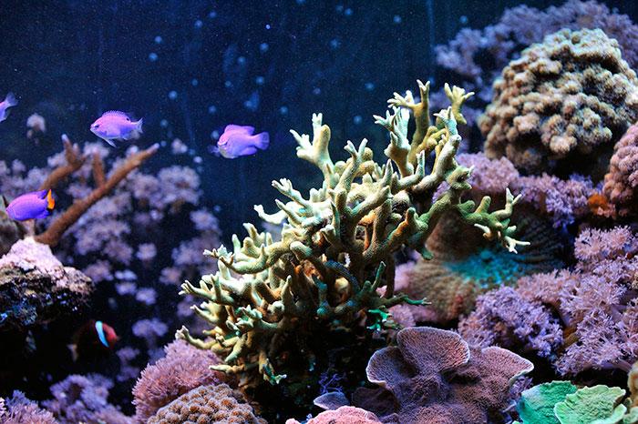 Gdynia Aquarium Coral reef