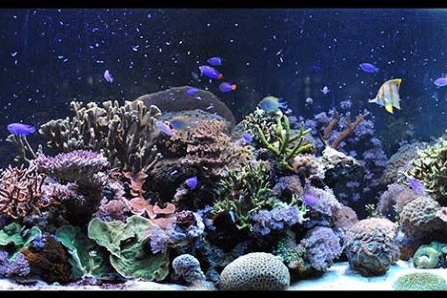 Gdynia Oceanarium